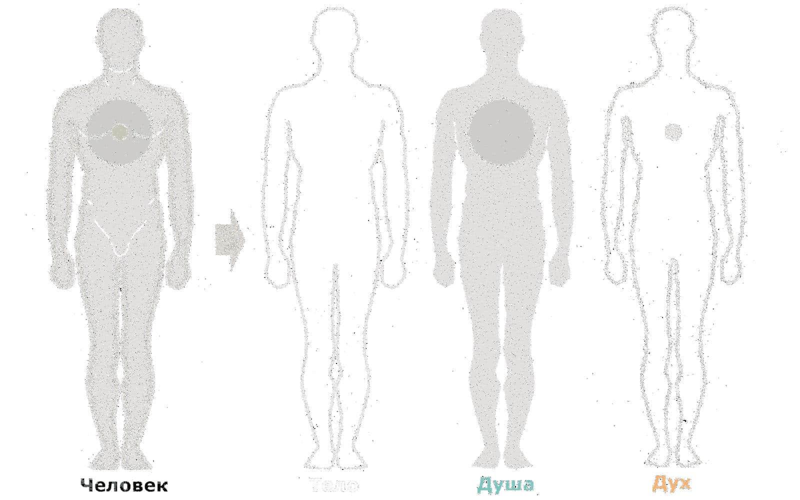 *** Антон Кузнецов | семинар «Тело — его вес и функция — управление весом» | человек Дух душа ***